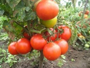 Помидоры каскад: особенности выращивания, описание достоинств, отзывы о томате