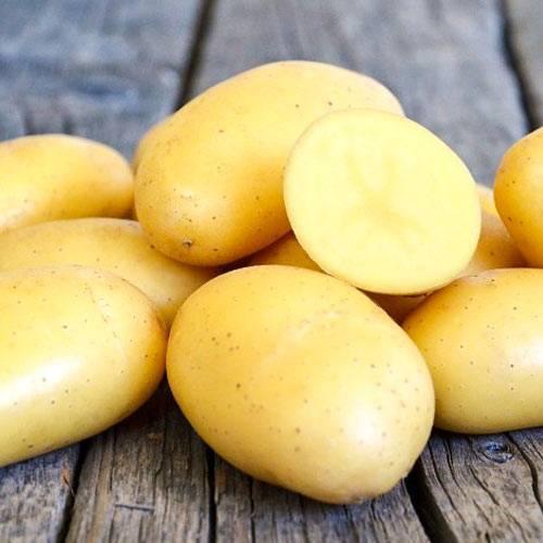 Картофель ривьера: описание и характеристика сорта, выращивание и уход