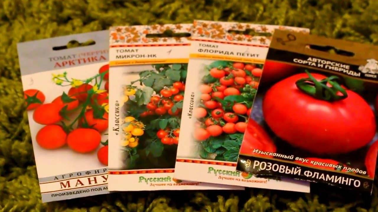 Комнатные помидоры: зимний урожай