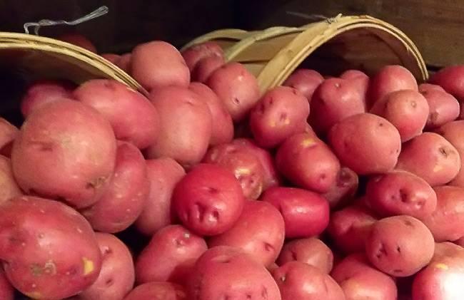 Сорт картофеля розара: описание с фото, характеристика, отзывы
