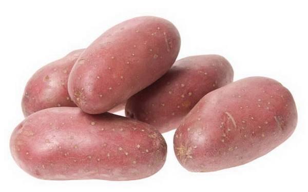 Стойкий картофель «маргарита», выведенный голландскими селекционерами — описание сорта, характеристика, фото
