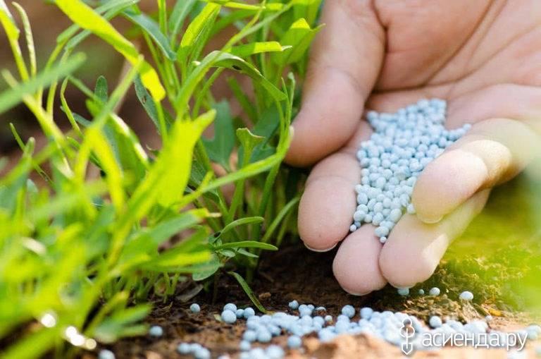 Хелат железа: зачем нужен растениям, применение, как сделать самому