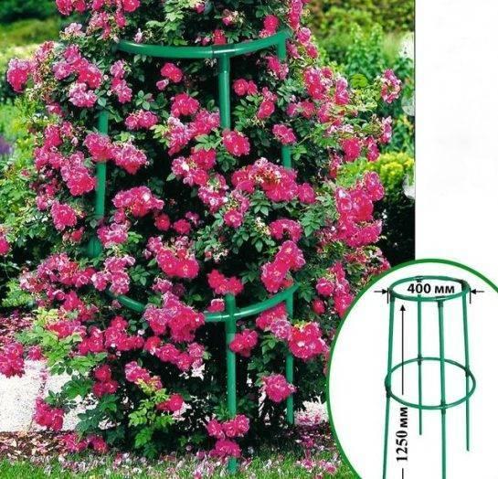 Декоративная пергола для плетистых роз своими руками