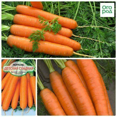 Морковь болеро