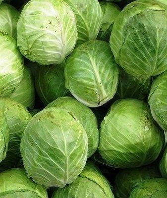 Белокочанная капуста надежда – популярный урожайный сорт, испытанный временем