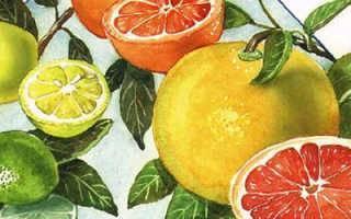 Апельсин скрещенный с гранатом — существует ли такой гибрид