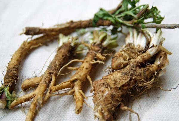 Девясил — лечебные свойства, польза и противопоказания. описание, виды растения, препараты с девясилом и их применение