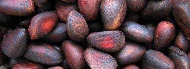 Как правильно хранить кедровые орехи