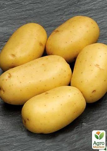 Описание картофеля лабадия: характеристика, фото и отзывы
