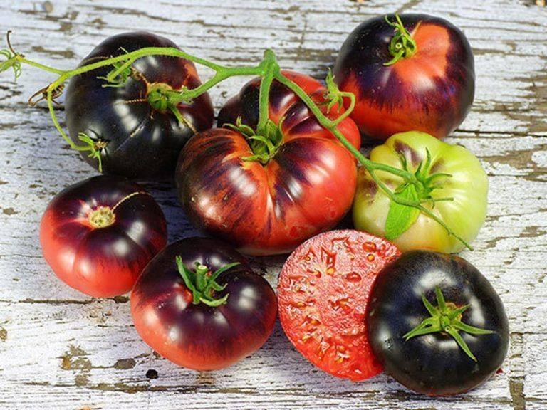 Сорт томата гордость застолья: фото и описание