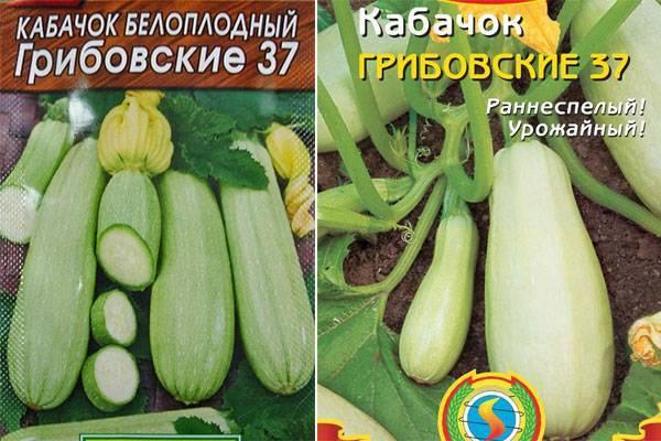 Кабачок грибовский 37 - описание сорта и уход за ним
