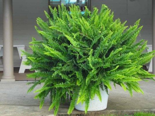 Всё о видах папоротников: название разновидностей, что такое, описание растения