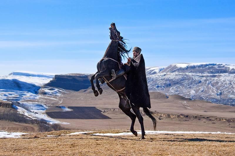 Универсальная порода лошадей карачаевская – настоящий горец