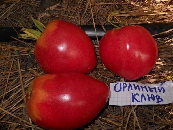 Детерминантный сорт помидор, что это?