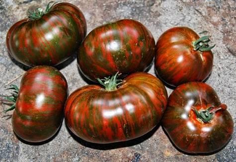 Томат полосатый шоколад - описание сорта, агротехника, фото