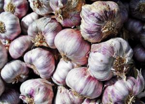 Чёрная смородина добрыня: характеристики сорта и особенности выращивания