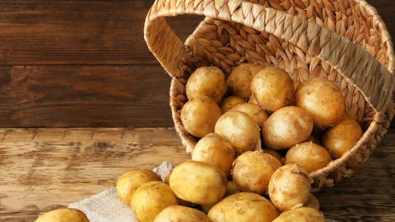 Сорт картофеля «джувел»: характеристика, описание, урожайность, отзывы и фото