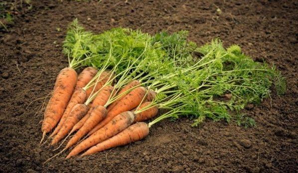 Как в домашних условиях сохранить морковь на зиму
