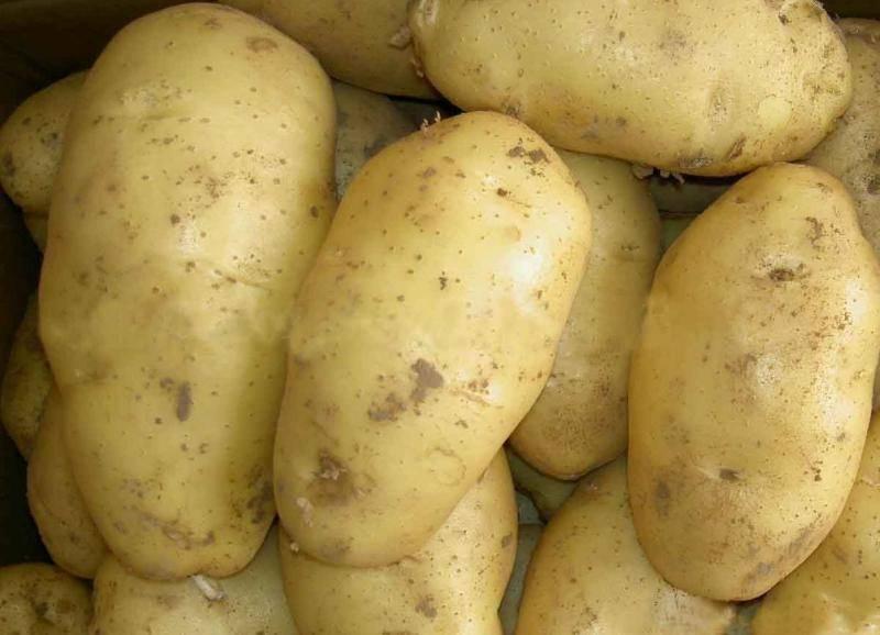 Картофель лабадия