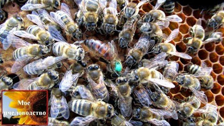 Значения суши для пчел в пчеловодстве