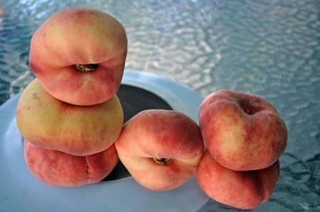 Особенности выращивания персика сорта донской морозоустойчивый