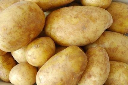 Картофель лабадия – описание сорта, фото, отзывы