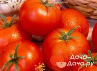 Сорт помидора «волгоградский розовый»: фото, видео, отзывы, описание, характеристика, урожайность