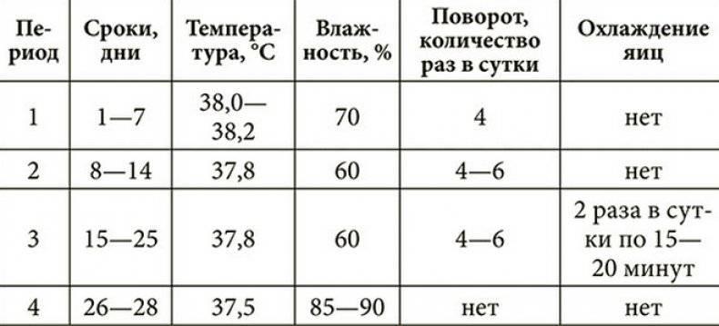 Разведение цесарок в домашних условиях: кормление, размножение, доходы и расходы