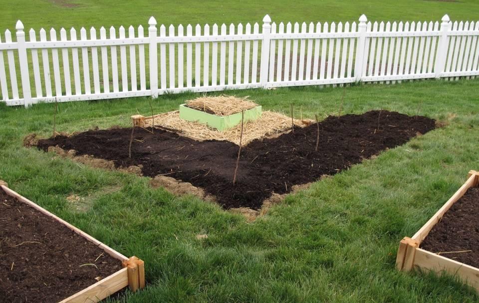 Как и где посадить малину: почва, сроки хранения черенков, подвязка на шпалеры, уход и борьба с вредителями