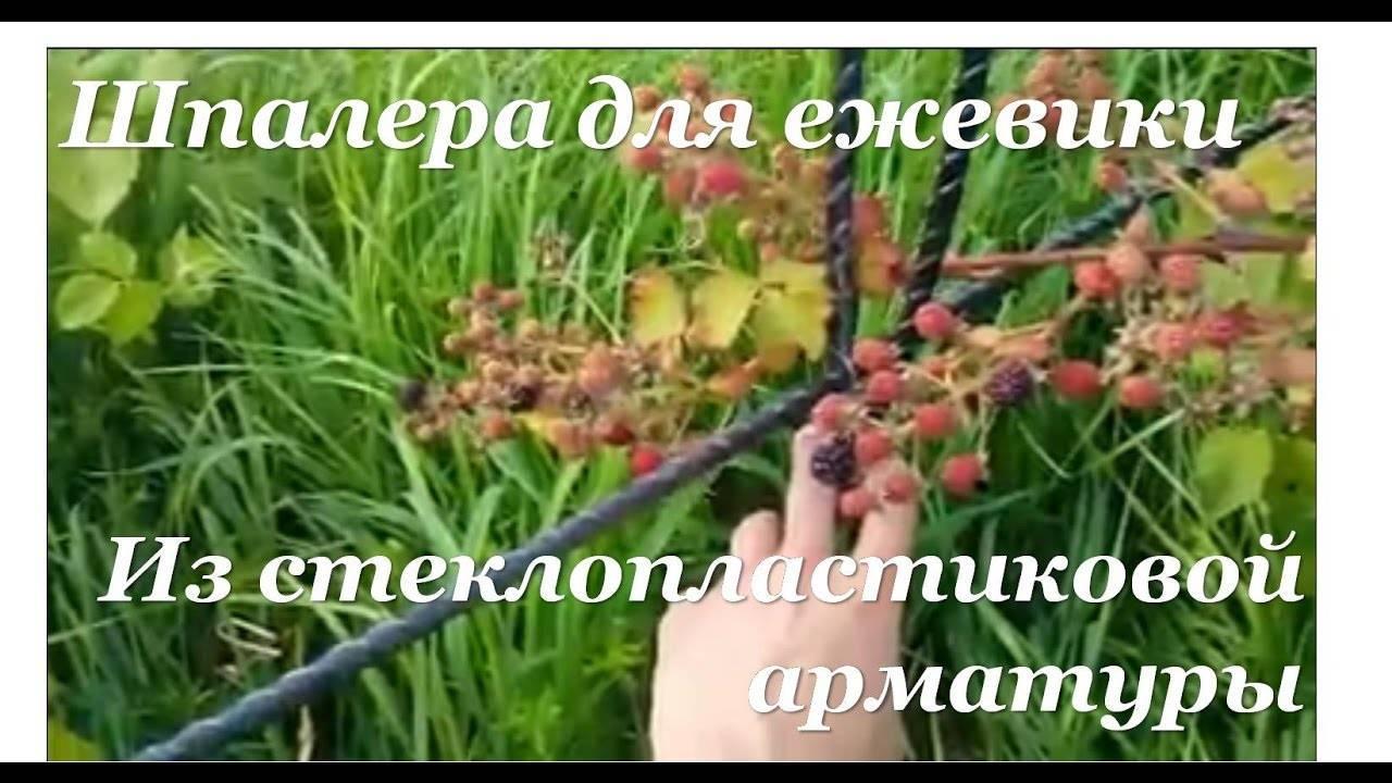 Шпалера для помидоров своими руками: как правильно сделать и установить опоры. простые схемы, чертежи и 105 фото шпалер