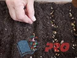 Как правильно выращивать можжевельник?