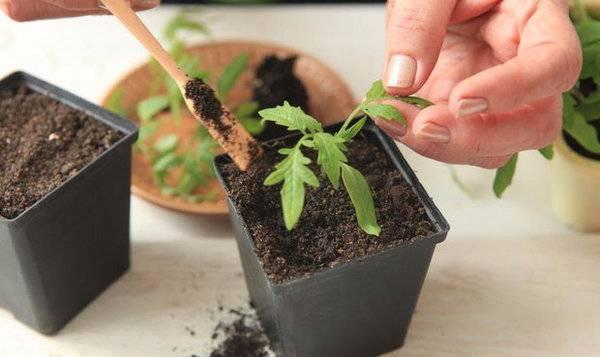 Стаканчики из натуральных материалов или торфяные горшочки для рассады: как пользоваться полезным приспособлением