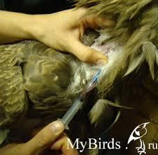 «взятие крови у животных. техника взятия крови у животных для исследования