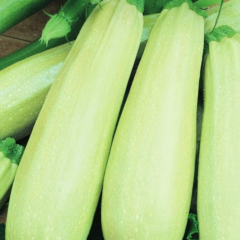 Кабачок мечта хозяйки - фото урожая, цены, отзывы и особенности выращивания