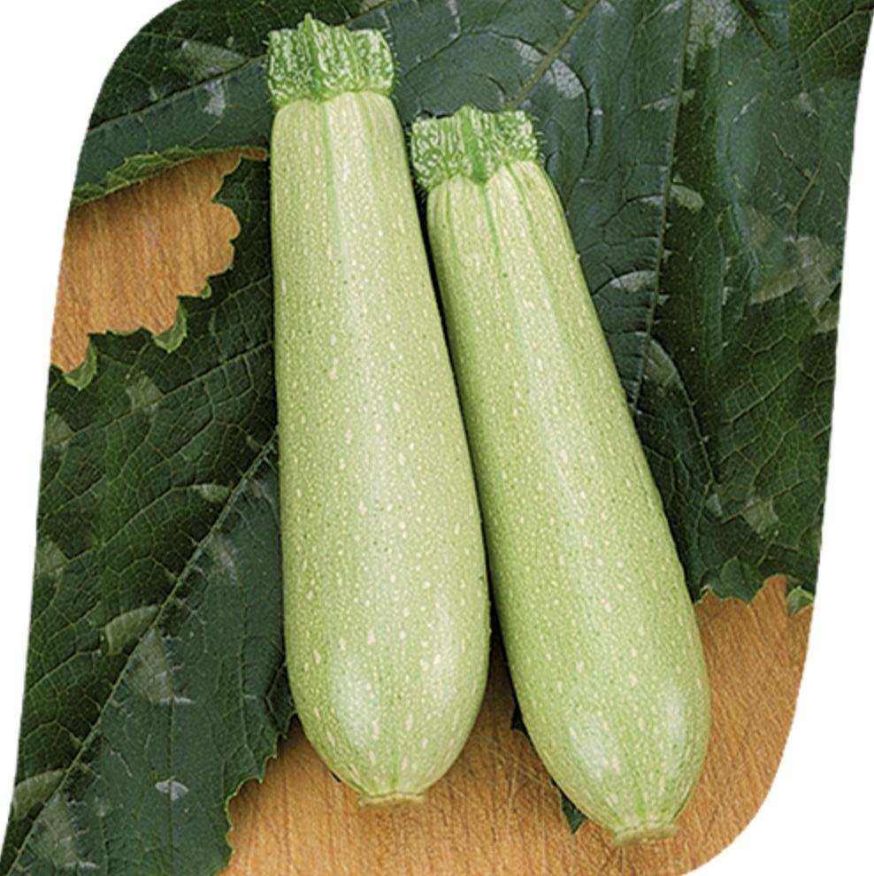 Кабачок искандер f1: отзывы, фото куста, описание и характеристика сорта, урожайность