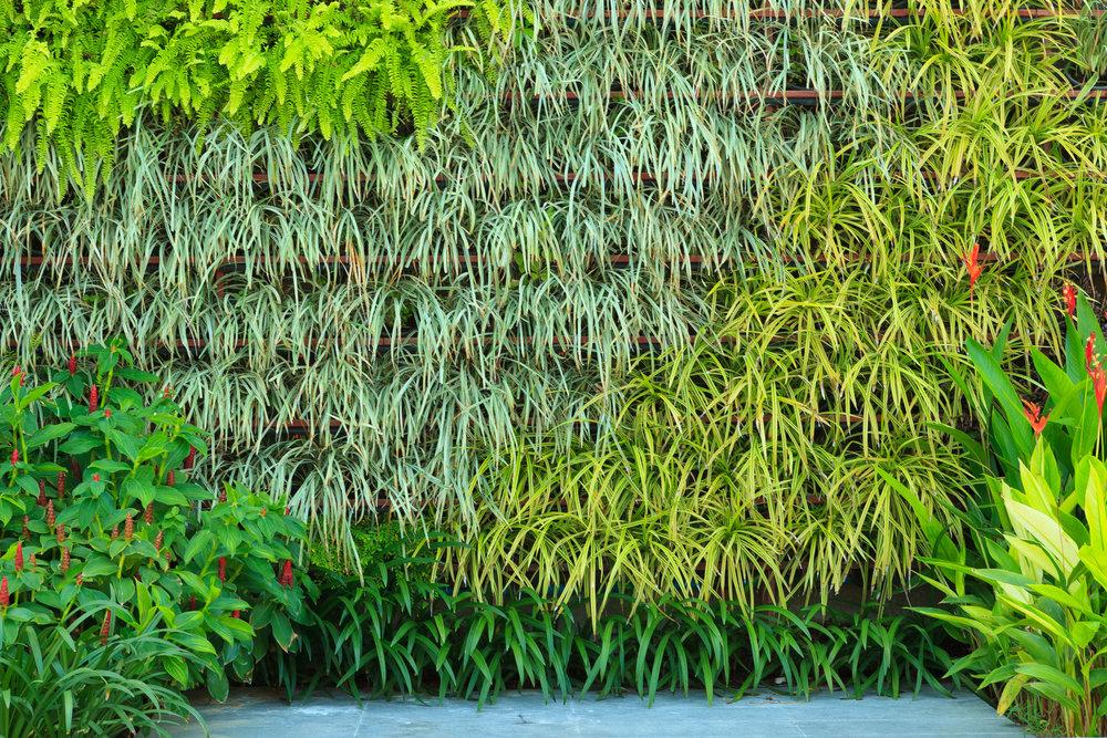 20 восхитительных идей создания вертикального озеленения для украшения дома и садового участка