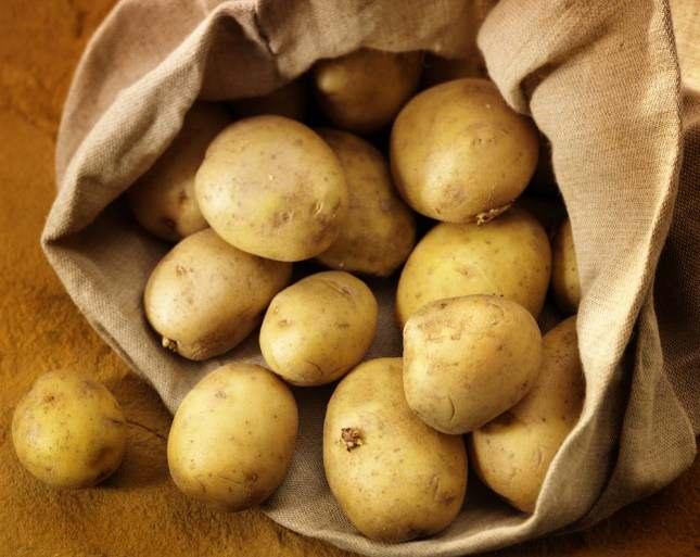 Сорт картофеля ласунок: описание, агротехника выращивания