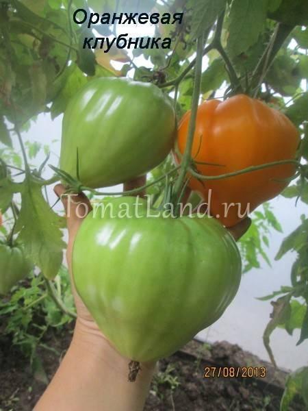 Характеристика и описание сорта томата оранжевая клубника немецкая, его урожайность