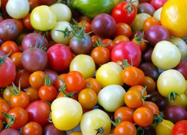 Самые вкусные и урожайные томаты для подмосковья – рекомендации по выбору