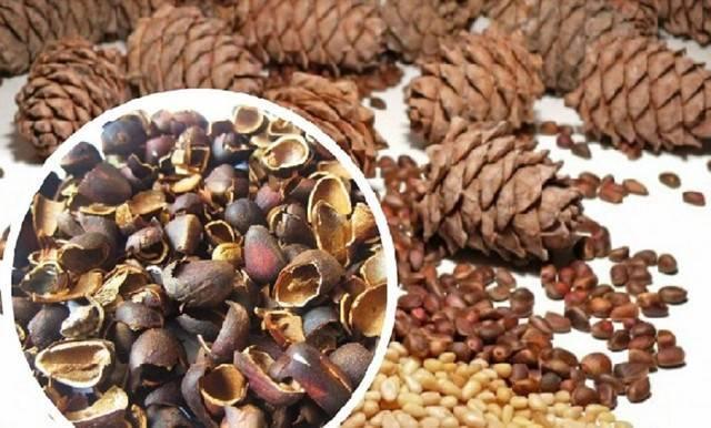 Лечение кедровыми орехами: целебные рецепты
