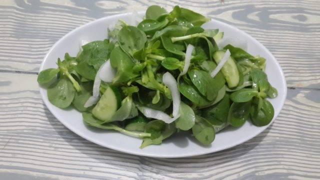 Портулак огородный: лечебные свойства, фото, польза и вред, применение в кулинарии, народной медицине, рецепты