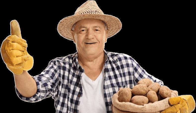 Картофель любава: 8 особенностей и 11 советов по выращиванию и уходу