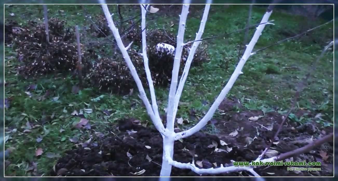 Лечебная болтушка для садовых деревьев. древесная косметология и хирургия рецепт болтушки из глины и извести