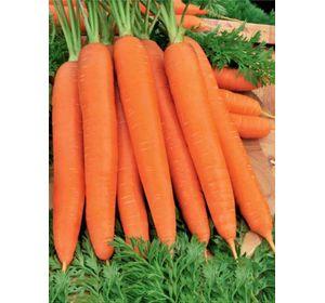 Какой сорт моркови лучше выбрать? описание самых урожайных видов овоща
