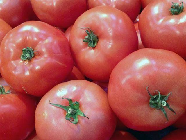 Сорт томата пинк парадайз: фото и описание