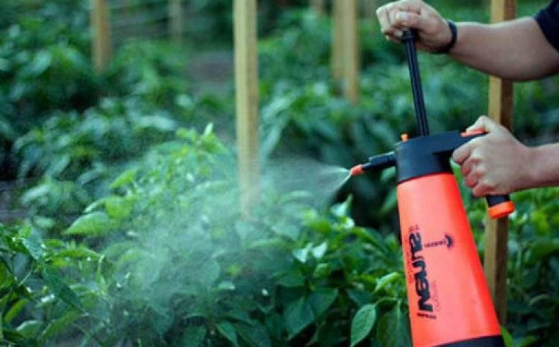Борная кислота для опрыскивания томатов: инструкция по использованию