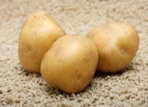 Картофель рогнеда описание сорта фото отзывы
