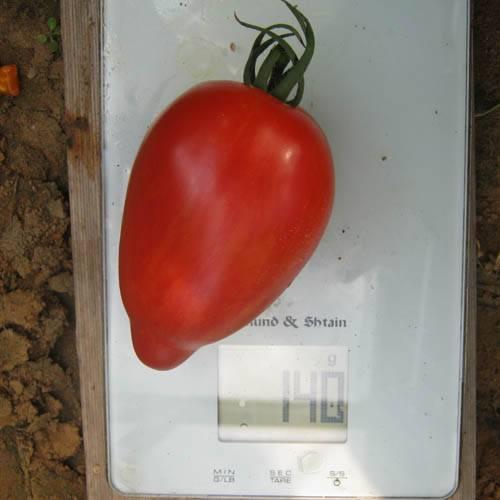Минусинские сорта томатов
