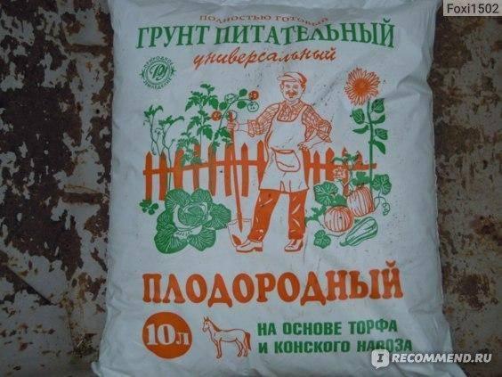 Огурец директор f1: описание сорта, фото, отзывы огородников, посадка и уход, урожайность