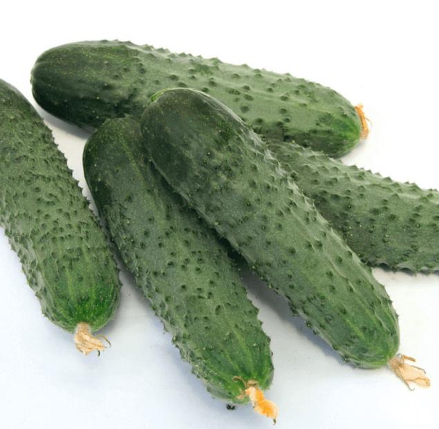 Уход и выращивание огурцов в открытом грунте: как правильно ухаживать, чтобы получить хороший урожай
